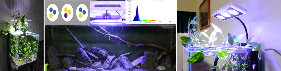Led s are the best choice for lighting your fishtank for Best freshwater aquarium fish combination